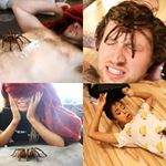 1 Tarantula, 2 Girls, 4 Guys -> Guess What Happened...